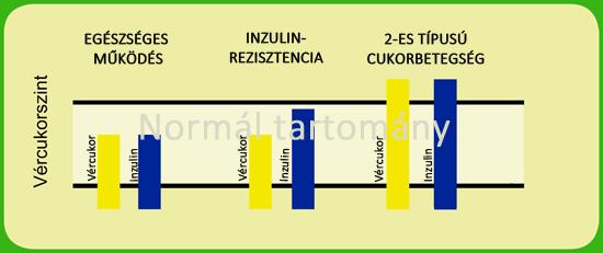 Inzulin műküdése és az inzulinrezisztencia